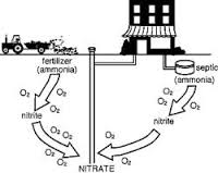 Nitrates often come from septic tanks or farming